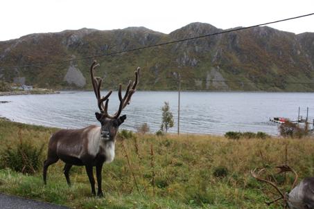 Nórsko, krajina fjordov, trolov aVikingov