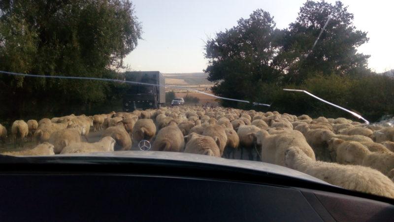 azerbajdzan_cesta-a-ovce